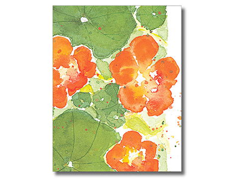 Nasturtium Notecards